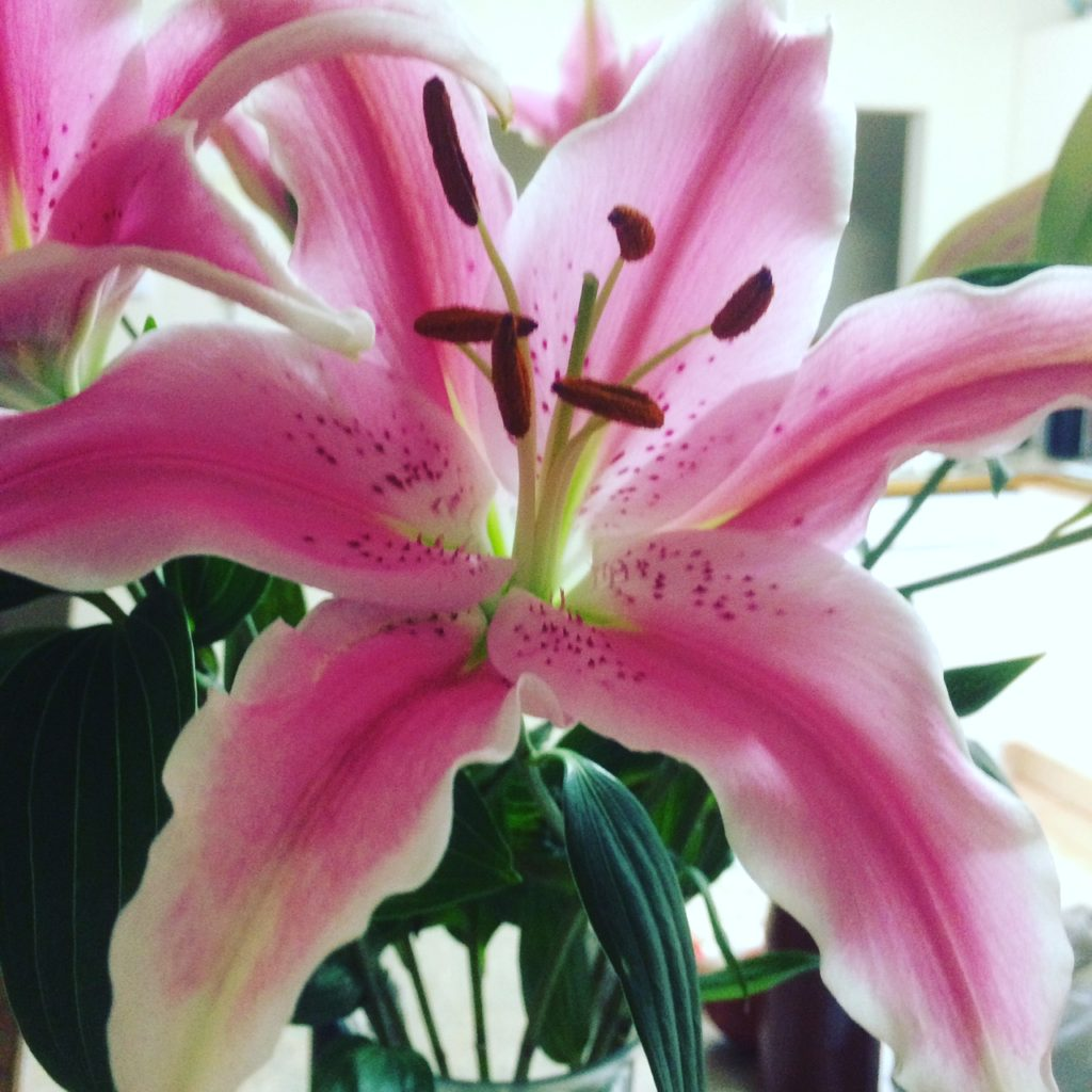 i love fresh flowers especially lillies